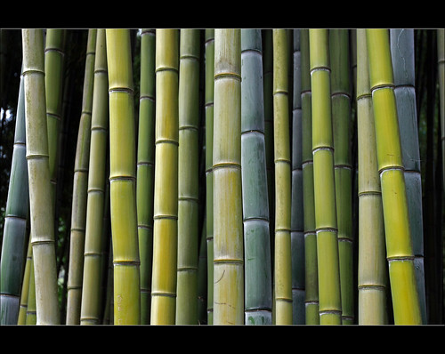 Bamboo shapes