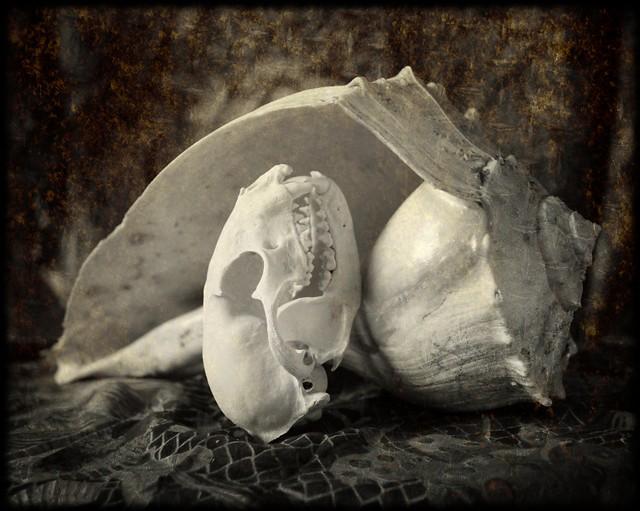 Radiant Bones - Still Life
