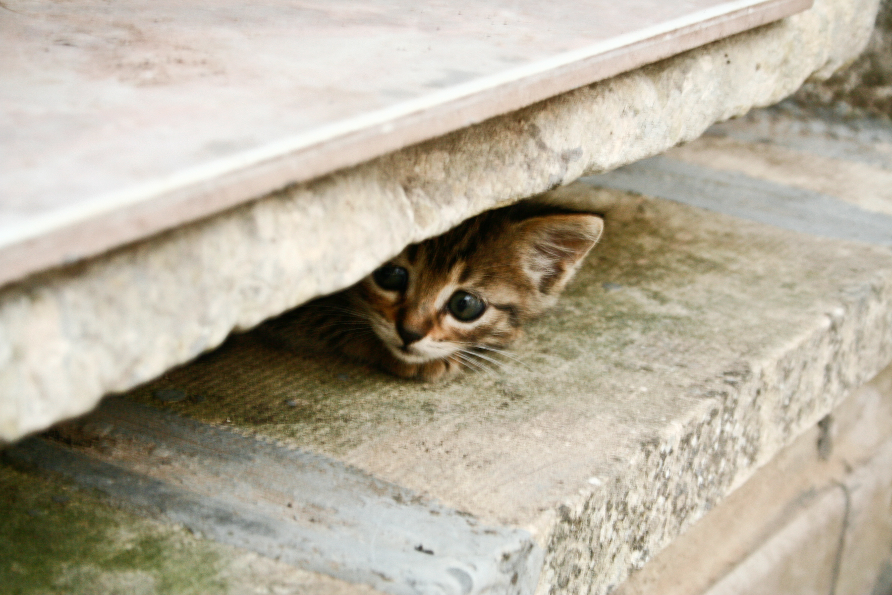 non fidarsi è meglio - my scared cat - gatto