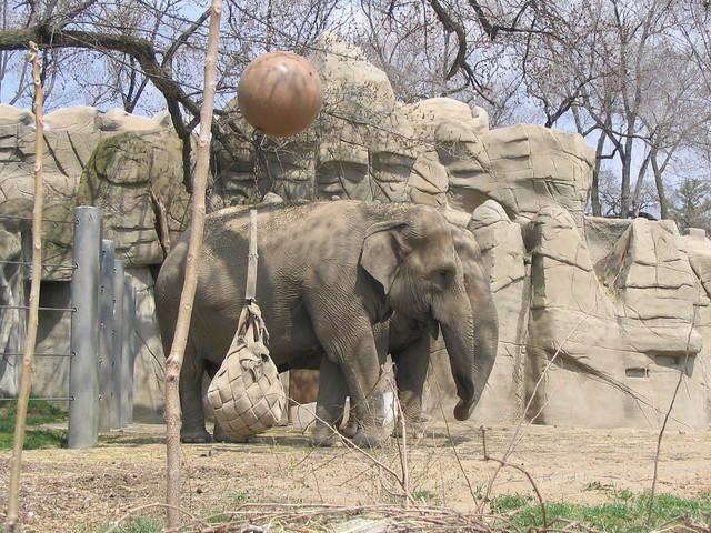 Detroit Zoo Elephants