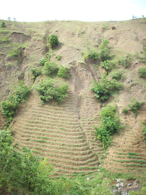 Contour farming definition meaning for Terracing definition in agriculture