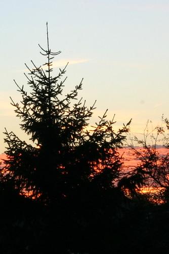 autumn fall silhouette sunrise