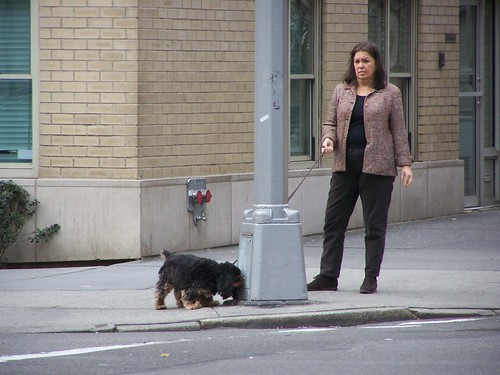 Dog walking, NYC