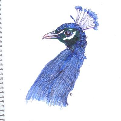 Watercolor Pencil Sketches