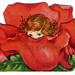 To My Valentine Rose by karen horton