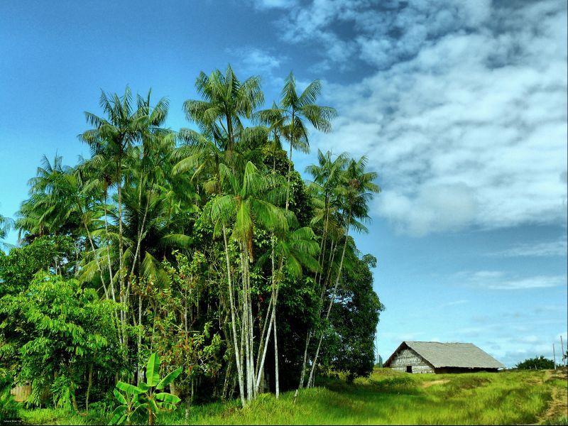 Foto Amazonas