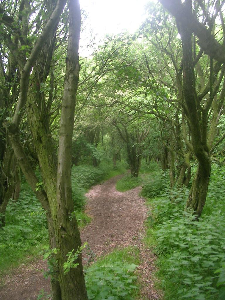 Into a hawthorn wood Tring Circular