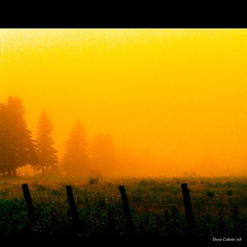 Two friends in the misty light...!!! / Deux amis dans la brume de lumière...!!!