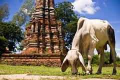 amazing THAILAND - 213