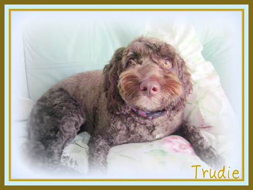 ~~Trudie..after her trim.......