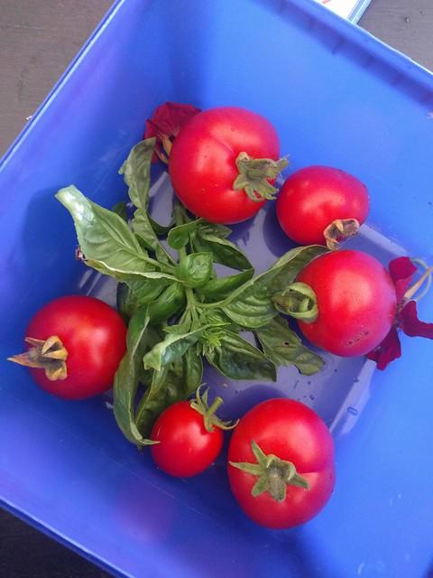 tomato and basil