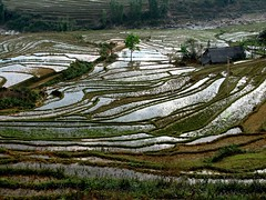 Vers Ta Phin - Vietnam