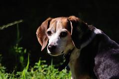 Beagle - mirror lens