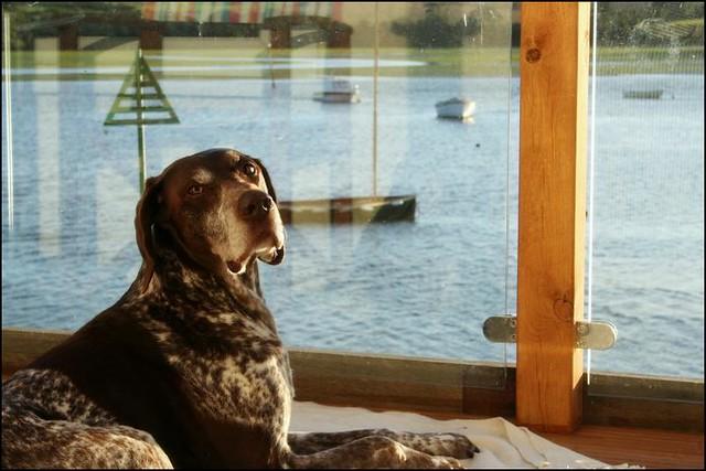Dog Friendly Accommodation Combe Martin
