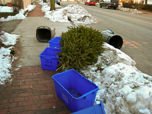 christmas tree in the gutter