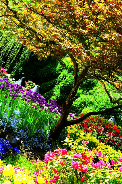 Buchart gardens beautiful trees and plants a photo on for Garden trees b q