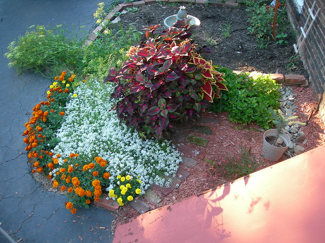 Flower Herb Garden Flickr Photo Sharing