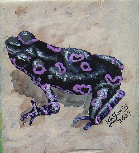 Black Amp Purple Frog Flickr Photo Sharing