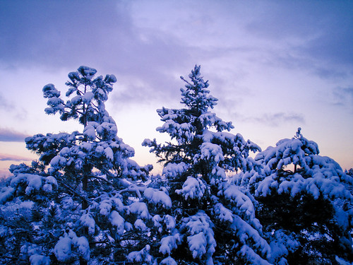 blue trees winter sky sun foothills snow mountains cold nature pine clouds sunrise scott outdoors photography utah cool bush ut wasatch purple sandy saltlakecity pines rockymountains slc pinetrees snowcoveredtrees lcc littlecottonwoodcanyon wasatchrange goldstaraward naturethroughthelens scottbush
