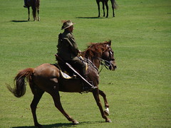 animal sports(0.0), english riding(0.0), eventing(0.0), sports(0.0), polo(0.0), endurance riding(0.0), mustang horse(0.0), equestrianism(1.0), western riding(1.0), mare(1.0), stallion(1.0), equestrian sport(1.0), horse(1.0),