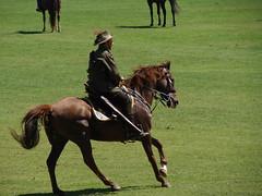 equestrianism, western riding, mare, stallion, equestrian sport, horse,