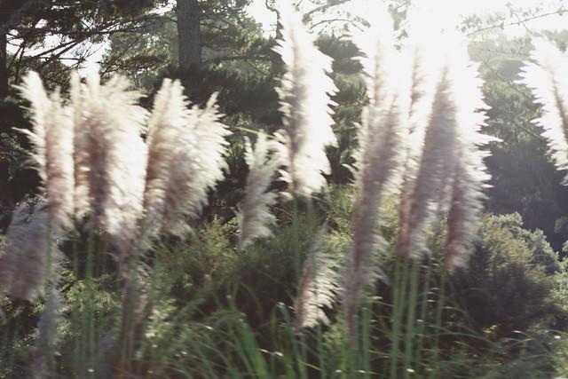 hejregina.blogspot.com grönt2