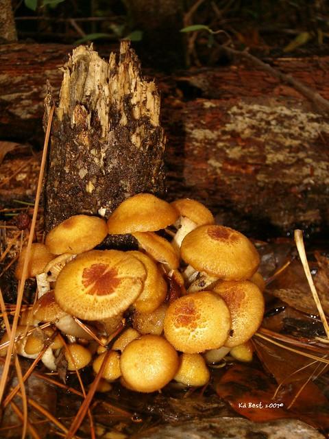 Mushrooms  U0026 Stump