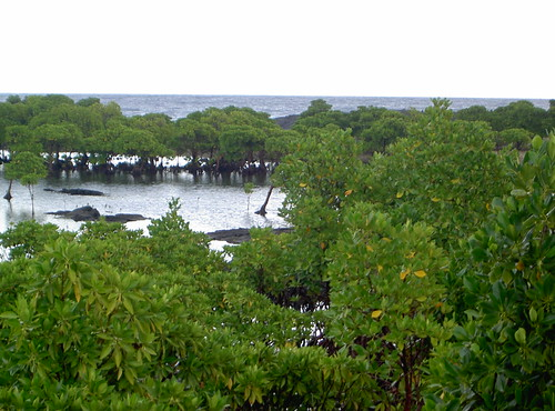 Comoros - mangroves near Moroni
