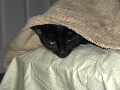 Under Blanket