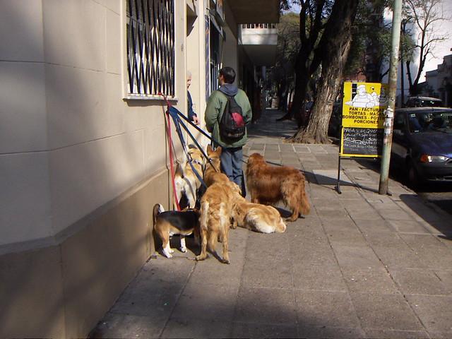 un paseador de perros en madrid