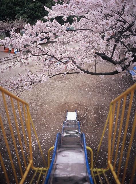 溜滑梯 上田城-櫻千本