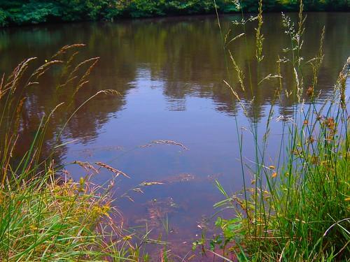 summer nature fishing