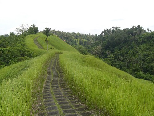 Walking the ridge between two streams,Ubud