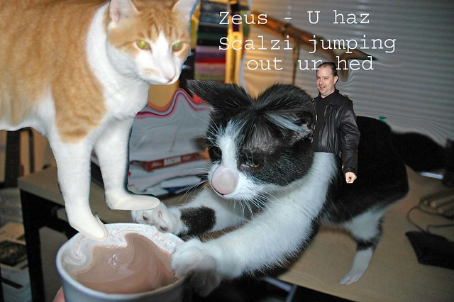 Zeus - LOLcat