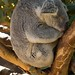 San Diego Zoo 108