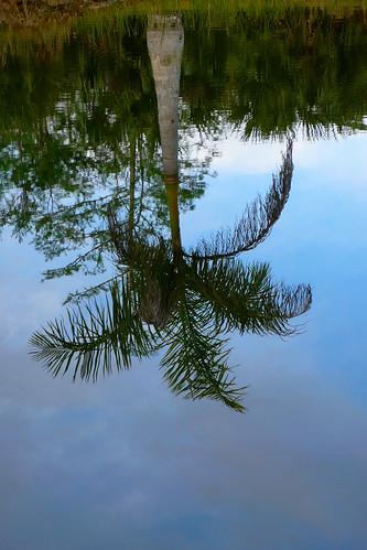 florida palmtree everglades panasonicdmclx2 keylargodiverflickrcom notovideos