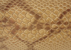 honeycomb, close-up,