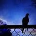 The Morning Stood Still by Karen Kleis