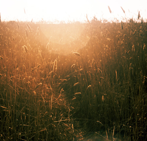 120 tlr film grass sunshine rolleiflex xpro fuji path flare marincounty pointreyes velvia100 limantour
