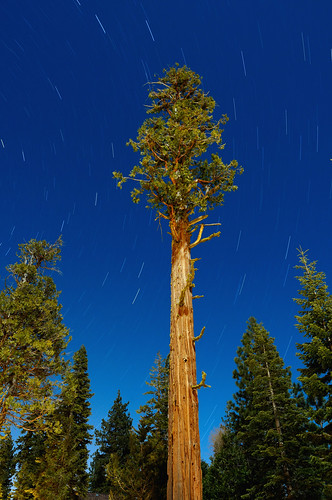 ca longexposure tree nature night stars landscape nikon nightscape nocturnal searchthebest laketahoe moonlit moonlight eyecandy afterdark startrails d300 naturesfinest incensecedar abigfave libocedrusdecurrens