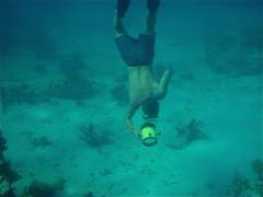 underwater diving, swimming, sports, sea, recreation, outdoor recreation, marine biology, water sport, underwater, freediving,