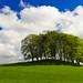 Spring Trees by charminbayurr