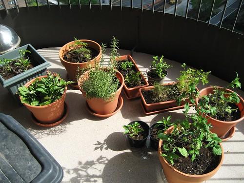 patio garden, may 18