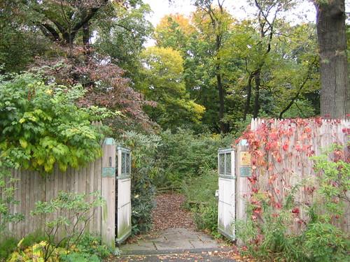 Native Flora Garden early fall color