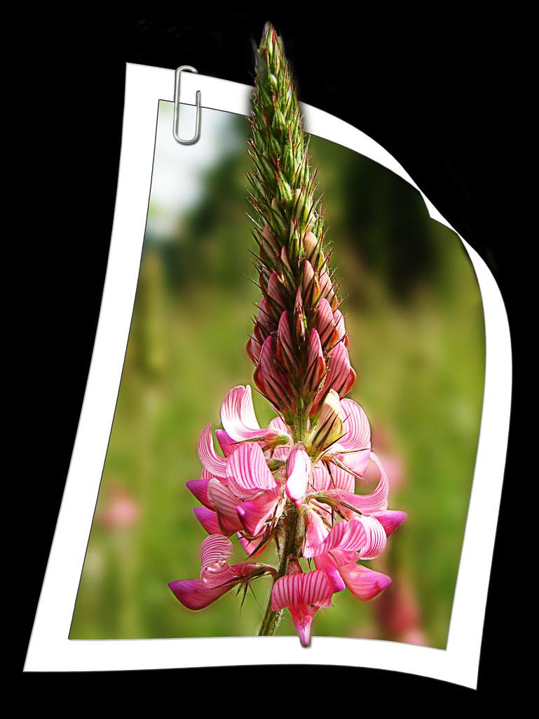 El Clip y la Orquídea / The Paperclip and the Orchid