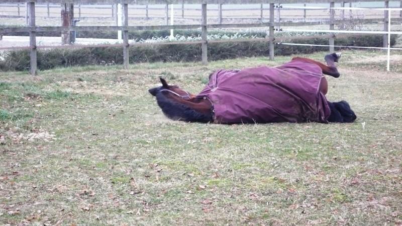 Horses in Feldbrunnen