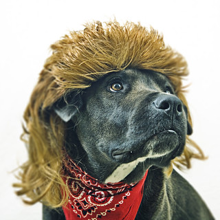 Every dog will have his (80's mullet)