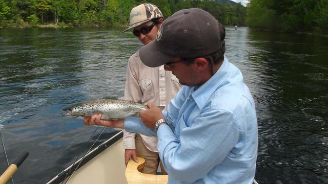 Big Eddy Salmon