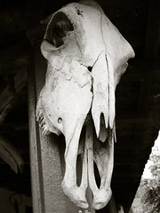 ancient history, white, head, monochrome, bone, black, skull,