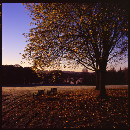 uk morning autumn england 120 6x6 film leaves sunrise geotagged frost fuji shadows hampshire velvia benches rvp100f hursley zenith80 industar2980mmf28 geo:lat=51025046 geo:lon=1399148